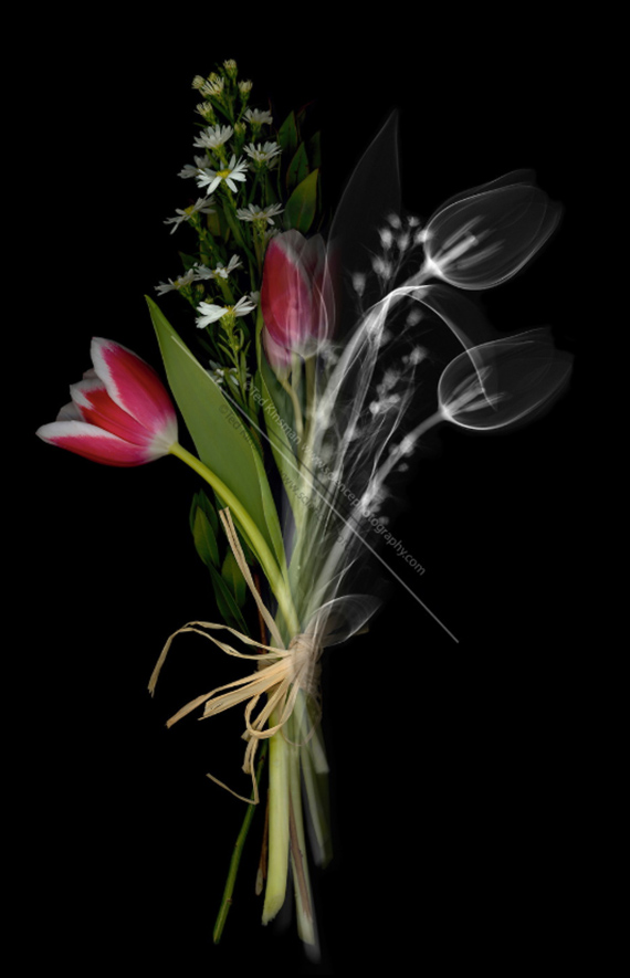 An X-ray of a bouquet, Art Xrays, Ted Kinsman