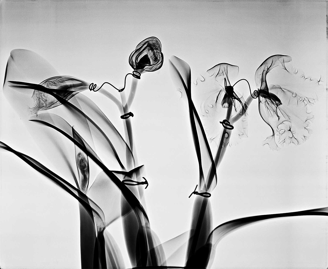 Orchid architecture, Health of the Heart, Steve Miller, 2008