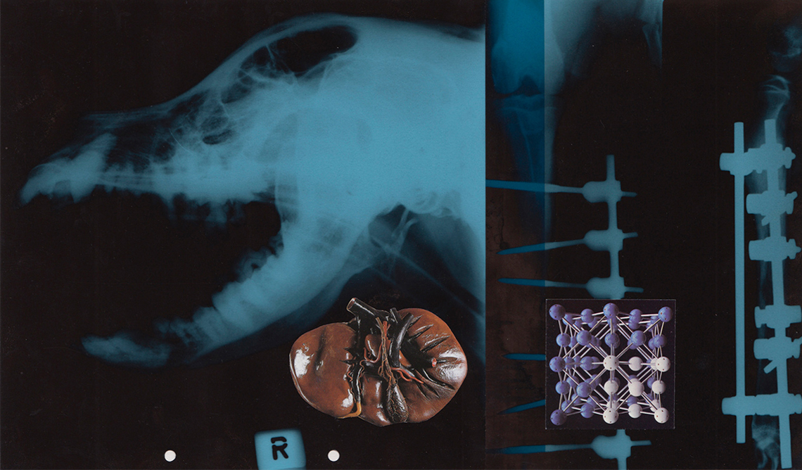 Hospitalised Dog, x-ray art, Stane Jagodič, 2008, montaggio